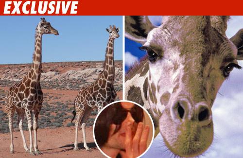 Show me on the giraffe where he shamon'd you.